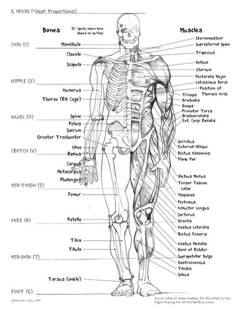 sections of the body anatomy 25 best ideas about human body drawing on pinterest