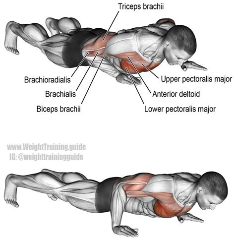 25 best ideas about lower chest workout on