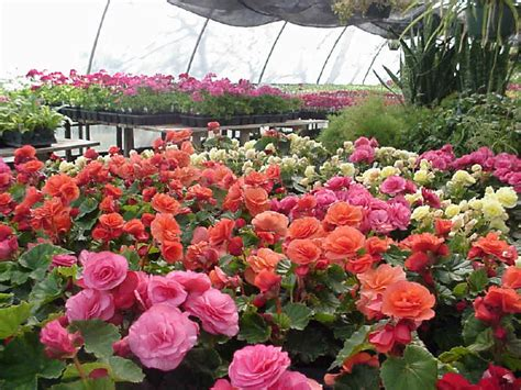 Garden Center Plants Bock S Garden Center Greenhouse Cawker City Kansas
