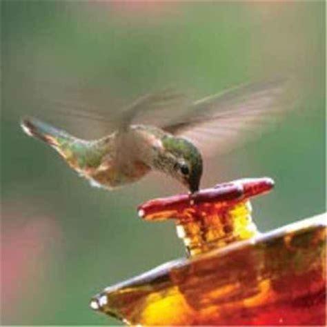 hummingbird feeders tips tricks helpful hints