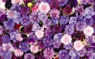 floral background wallpaper clipartsgram com