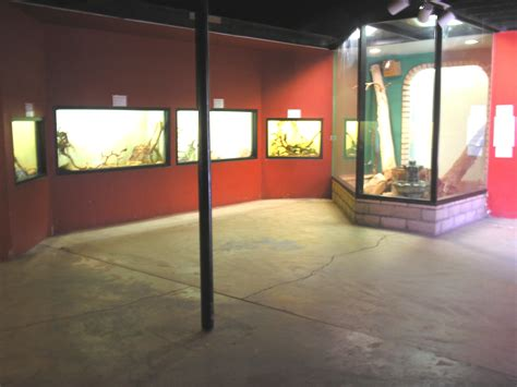 Reptile Rooms by File Reptile Room At Las Vegas Zoo Jpg