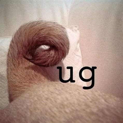 why do pugs curly tails 202 best images about memes on mondays lol and pets