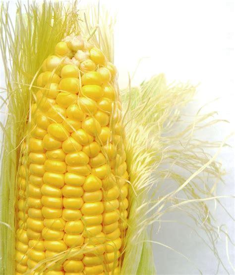 file corn on the cob jpg wikipedia