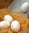 come cucinare un uovo come cucinare un uovo al microonde 7 passaggi