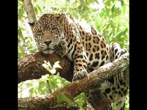 5 Animales Que Deberias Ver by Animales Feroces