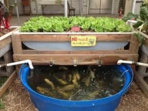 backyard aquaponics gardening