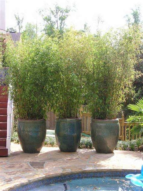 best plants for backyard privacy 22 fascinating and low budget ideas for your yard and
