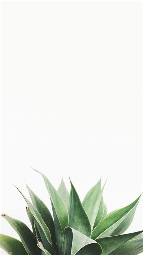 plant wallpaper best 25 white wallpaper ideas on