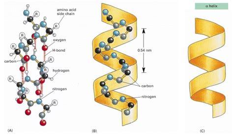 magnesio supremo posologia prote 205 na 4 maneras de prepararla mojica wellness