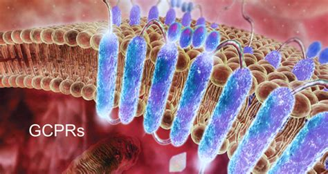 What is GPCR - Creative BioMart G Protein Coupled Receptors Pathway