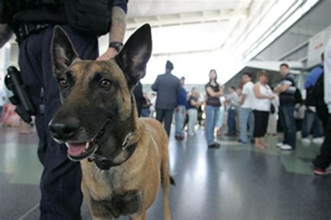white house dog breed meet white house guard dogs hurricane and jordan