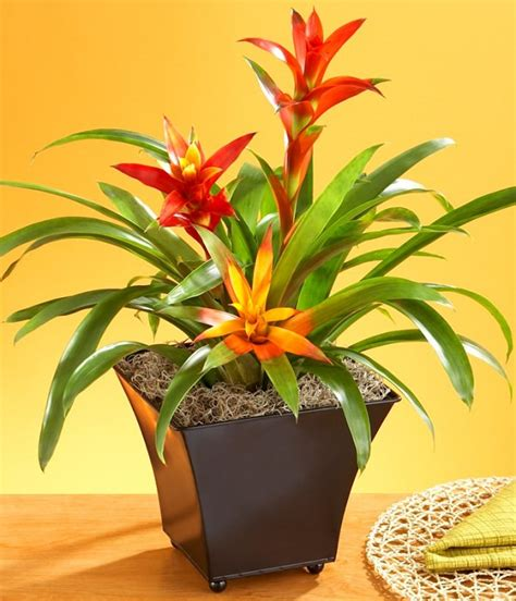 No Sun Plants Indoor | plants that grow without sunlight 17 best plants to grow