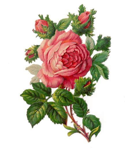 Single Rose Bud Vase Victorian Rose Borders Clipart Clipart Suggest