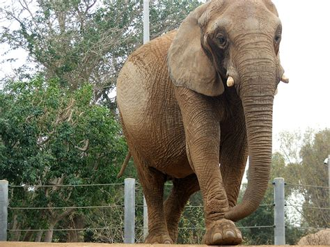 Zoo Search Zoo Elephants Images Search