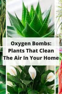 plants for the house 25 best ideas about house plants on pinterest plants