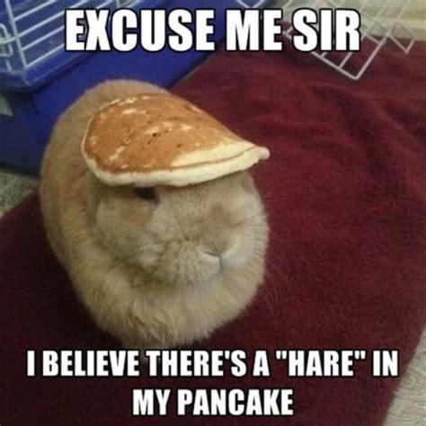 Pancake Meme - funny pancake quotes quotesgram