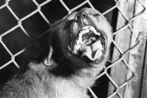 signs of rabies in dogs meet the parasites that human brains the crux