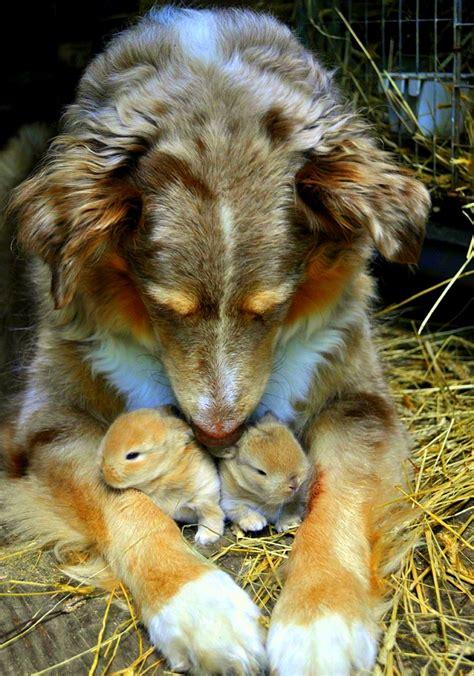 beautiful   dogs loving  baby animal friends