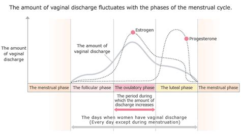 Ovulation After C Section by Image Gallery Ovulation Discharge Stages