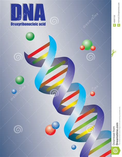 dna colors helix dna in color vector illustration stock vector