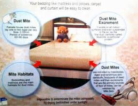 how to get rid of bed mites how to get rid of bed mites getting rid of bees nest in