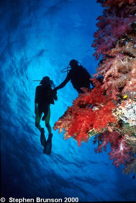 underwater photography  scuba divers  coral reefs