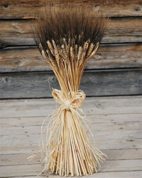 Large Dried Blackbeard Wheat Bunch Stand On Wheat Dried Wheat Centerpieces
