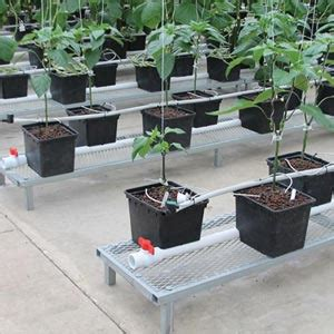 Hydrohobby For All Your Hydroponics Gear by Low Profile Benches Growers Supply