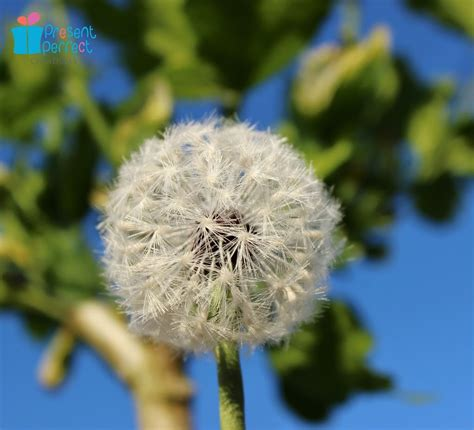 dandelion brooch archives presentperfect creations silk and leather flower accessories