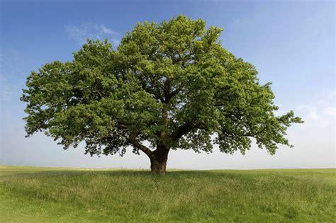 define tree category gareth austin horticultural media services