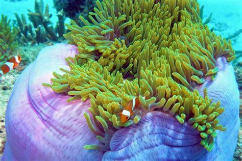 redang dive 3d2n coral redang island resort diving package