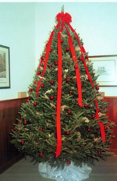 european christmas tree americans are starting to prefer european style treesamericans are starting to prefer