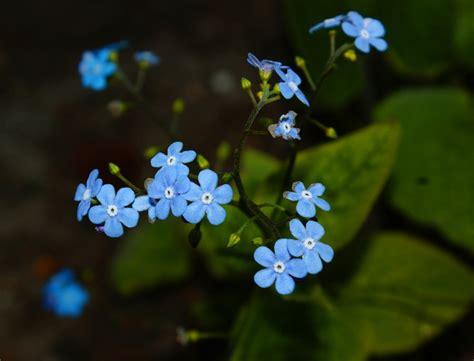 little blue flowers by gothish on deviantart