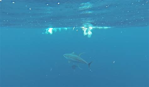 deep sea fishing boat charter tuna fishing charters cape town 187 deep sea fishing