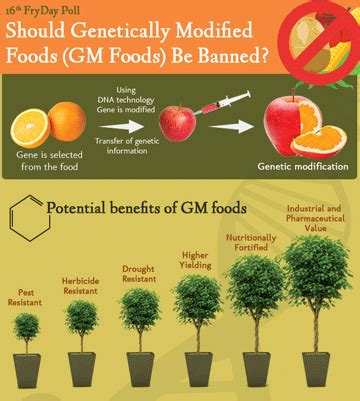 the health risks of genetically modified gmo foods health risks and benefits genetically modified foods