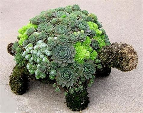 turtle succulent planter succulent turtle outdoor ideas pinterest