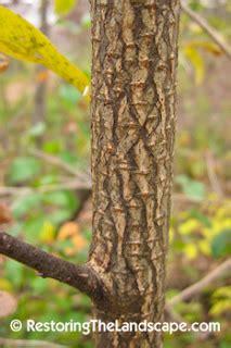 restoring  landscape  native plants invasive