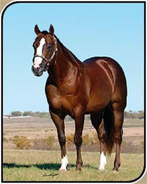 criadero de caballos raza cuarto de milla