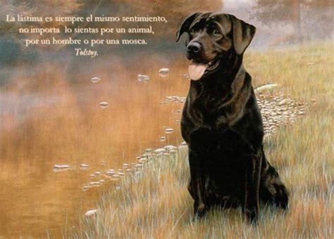 imagenes para reflexionar de animales imagenes de animales con frases celebres para reflexionar