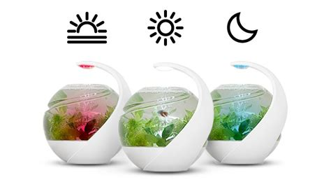 Aquarium Top Filter Filter Akuarium Lengkap avo tropical self cleaning fish tank launches on kickstarter