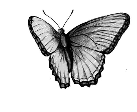 butterfly simple how to draw a butterfly draw central