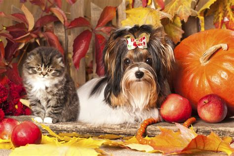 7 tips for keeping your pets safe on Halloween