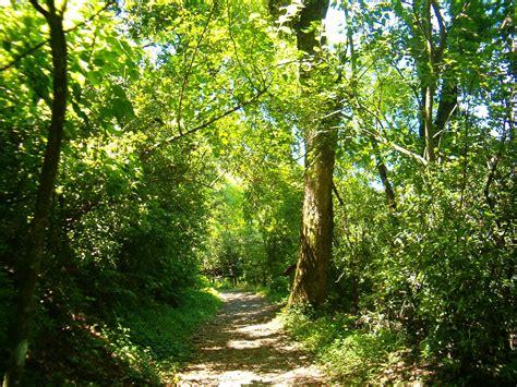 imagenes de bosques verdes tipos de ecosistemas terrestres ecosistemas del mundo