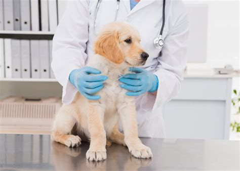 puppy vet visits 15 questions veterinarians wish you would ask about your puppy petcha