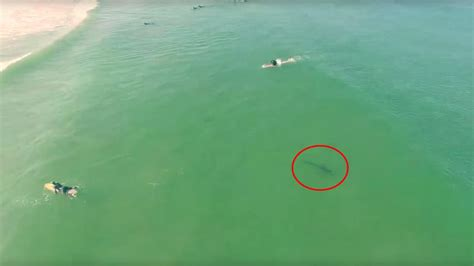 boat rs near disappearing island video drone captures footage of shark swimming near