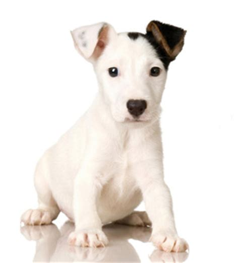 the of raising a puppy pdf from puppies to dogs the science of puppy selection raising and