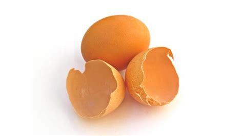 Bubuk Kulit Telur manfaat kulit telur bagi kecantikan halaman 2