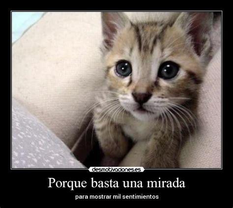 imagenes de gatitos llorando porque basta una mirada desmotivaciones