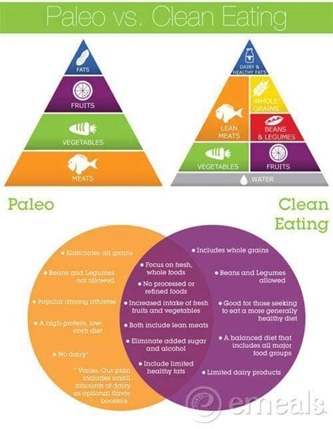 clean cookbook the all in 1 healthy guide paleo vs clean healthy fitness clean diet